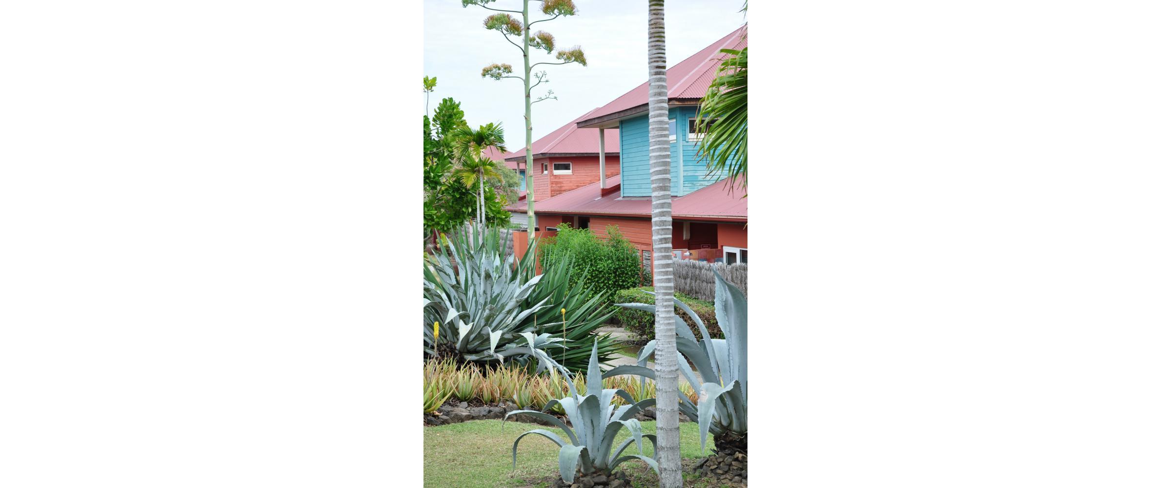 Cap Est - Martinique